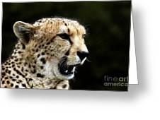 Big Cats 102 Greeting Card