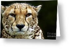Big Cats 51 Greeting Card