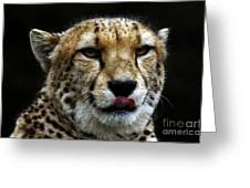 Big Cats 53 Greeting Card