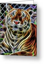 Big Cats  Greeting Card