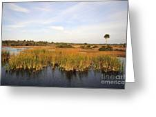 Big Cypress Landscape Number Six Greeting Card