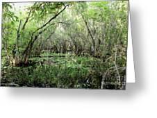 Big Cypress Preserve Greeting Card