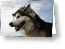 Big Dog Greeting Card
