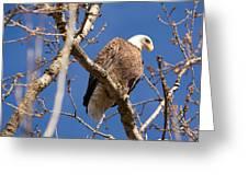 Big Eagle Greeting Card