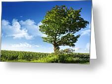 Big Elm Tree Near Corn Field Greeting Card