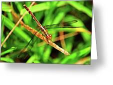 Big Eyed Dragonfly Greeting Card