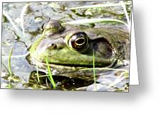 Big Eyed Frog In A Marsh Greeting Card