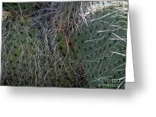 Big Fluffy Cactus Greeting Card