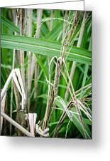 Big Grass Blade Greeting Card