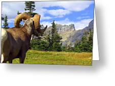 Big Horn 3 Greeting Card