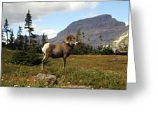 Big Horn 4   Greeting Card
