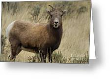 Big Horn Ewe-signed-#7480 Greeting Card