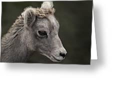Big Horn Lamb Greeting Card
