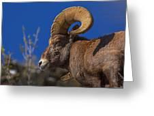 Big Horn Looking Down Greeting Card