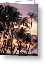 Big Island Palms Greeting Card