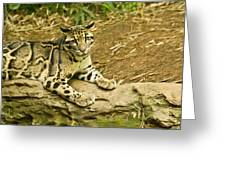 Big Kitty Cat Greeting Card