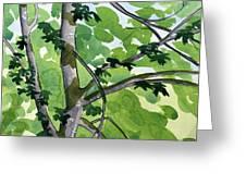 Big Leaf Maple Greeting Card
