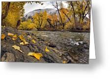 Big Lost Autumn Color Greeting Card