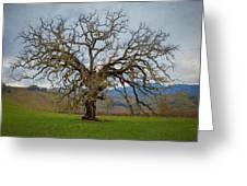 Big Oak Greeting Card