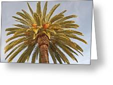 Big Palm Greeting Card