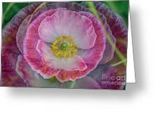 Big Poppy 4 Greeting Card
