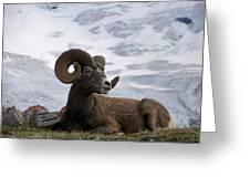 Big Ram Greeting Card