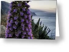 Big Sur Mornings Greeting Card