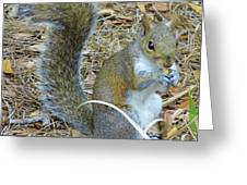 Big Tail Little Nut Greeting Card