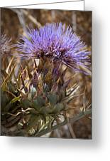 Big Thistle 2 Greeting Card