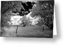 big tree in field IR Greeting Card