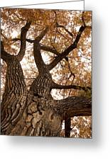 Big Tree Greeting Card by James BO  Insogna