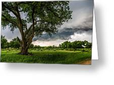 Big Tree - Tall Cottonwood And Storm In Texas Panhandle Greeting Card
