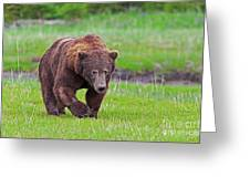 Big Ugly Grizzly Boar Claws Greeting Card