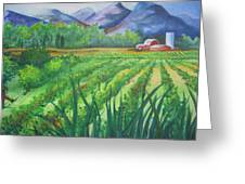Big Valley Farm Greeting Card