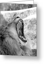 Big Yawn  Black And White Greeting Card