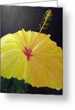 Big Yellow Hibiscus Greeting Card