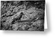 Bighorn Sheep Ewe On Wolf Creek Pass Greeting Card