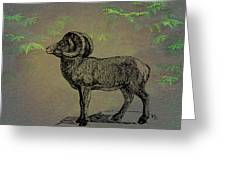 Bighorn Sheep  Greeting Card