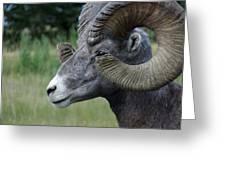 Bighorned Ram Greeting Card