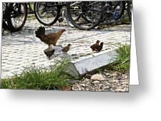 Biker Chicks Greeting Card