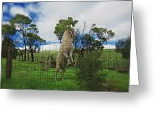 Billy Goat At The Lookout Post Greeting Card