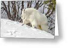 Billy Goat On The Move Greeting Card
