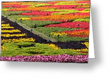 Biltmore Colors Greeting Card