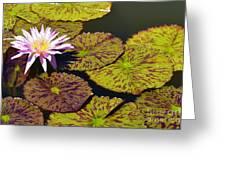 Biltmore Lily  Greeting Card