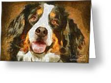 Bimbo - Bernese Mountain Dog Greeting Card