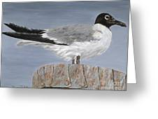 Bimini Gull Greeting Card