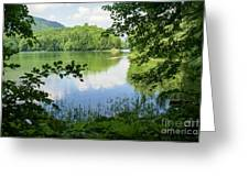 Biogradska Gora Forest  Greeting Card