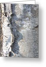 Birch Abstract 2 Greeting Card
