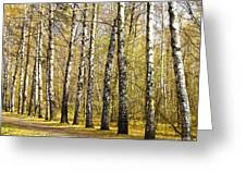 Birch Alley In Autumn Greeting Card