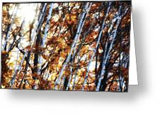 Birch And Oak And Sun Greeting Card